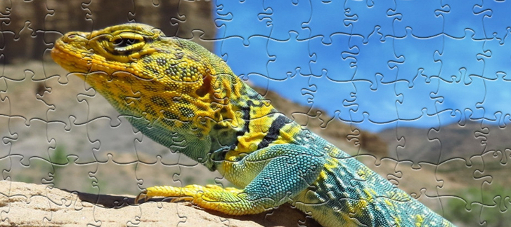 Claim a FREE Steam key for Pixel Puzzles Ultimate - Puzzle Pack: Reptile
